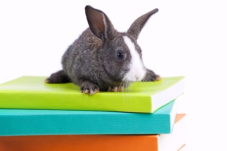 Rabbit over a stack of books (isolated on white)