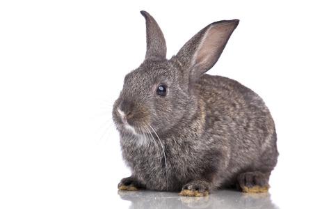 bunnie: Cute rabbit isolated on white