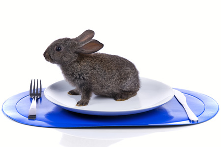 bunnie: Rabbit inside a plate (isolated on white) Stock Photo