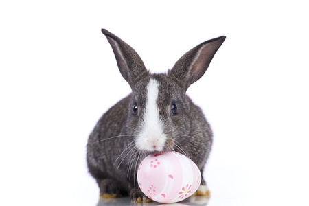 bunnie: Rabbit playing with a painted egg  (isolated on white)