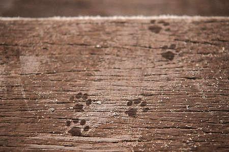 animal tracks: Impronte, tracce degli animali