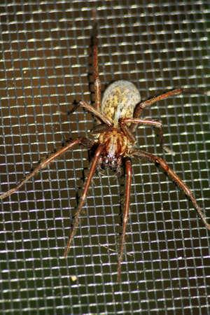 Spiders Zdjęcie Seryjne