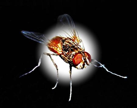 symbole: Design Foto with insect