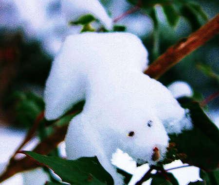 symbole: snow