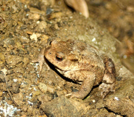 biotope: toad