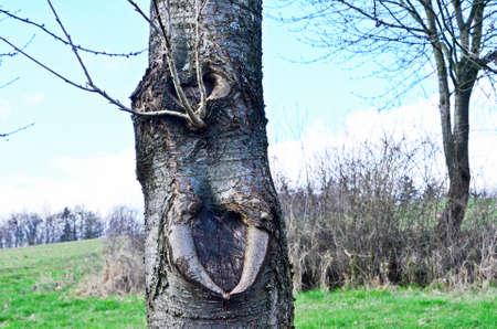 tusks: tree with teeth, tusks