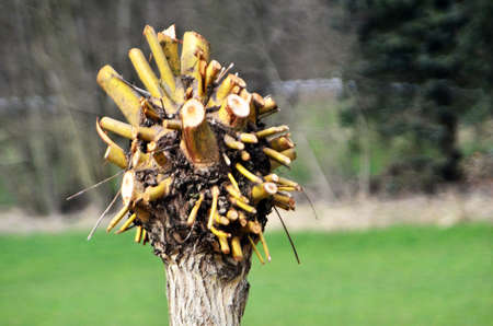 circumcised tree Фото со стока