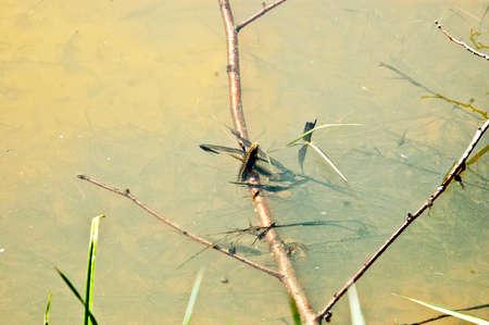 animals amphibious: breezing salamander Stock Photo