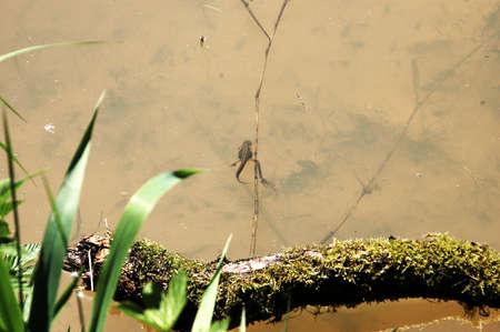 animals amphibious: salamander