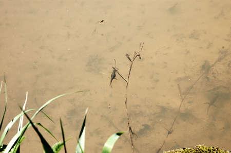 animals amphibious: Water Beasts