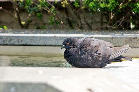 doze: Black Dove