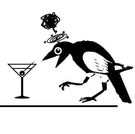 magpie: Drunken magpie Stock Photo