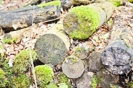 mossy: old mossy firewood Stock Photo