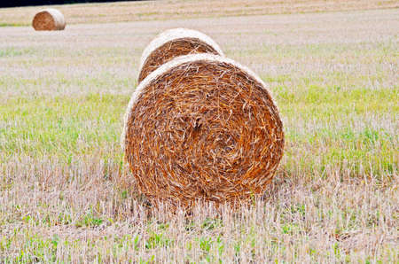 thatch: round bales thatch Stock Photo