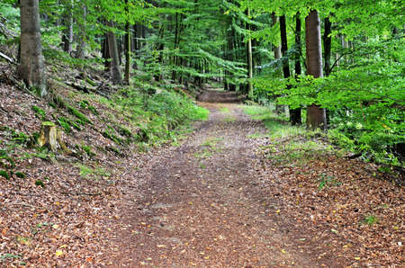 forest trail: Forest trail Stock Photo