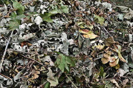 hojas antiguas: Old leaves on the ground Foto de archivo