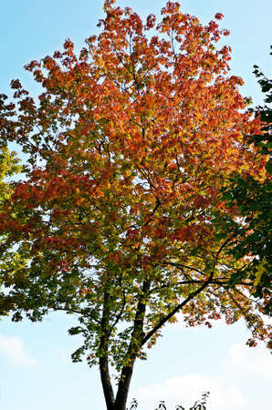 colorful tree: colorful tree