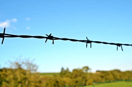 barbed wire fence: Stinging Barbed wire fence