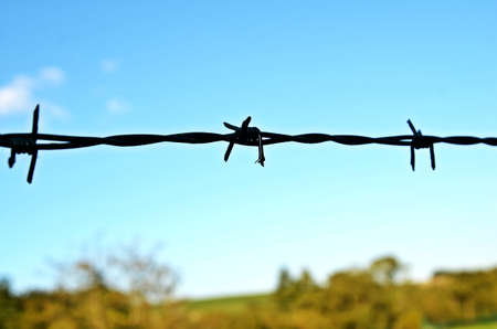 wire fence: Barbed wire fence