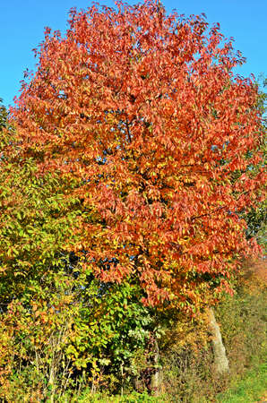 on leave: Red and golden leave