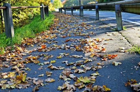 on leave: Path with falling leave Stock Photo