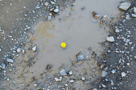 yellow blossom: yellow blossom in a pool
