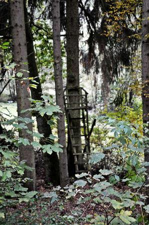undergrowth: Through the undergrowth