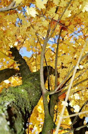 on leave: llok through golden leave