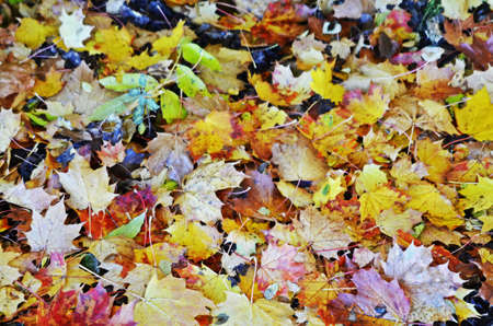 on leave: colorful leave under trees Stock Photo