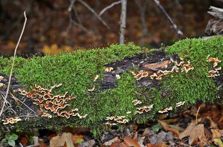 Moss and mushrooms
