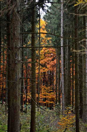 underwood: Wilderness with trees and underwood
