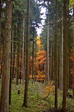 evergreens: evergreens and deciduous