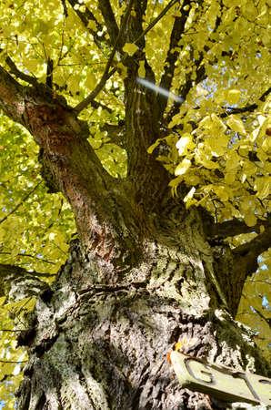 treetrunk: tree-trunk with bark Stock Photo