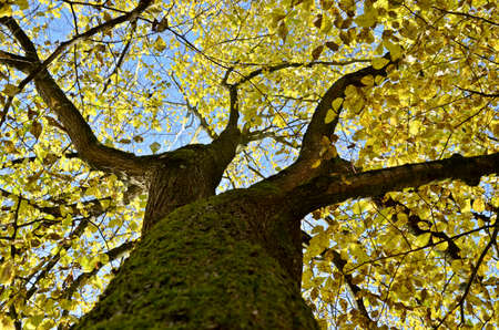 a treetop in the blue sky Stock Photo