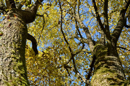 boughs: boughs with bark and leave