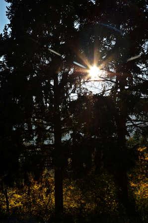 sunbeams: sunbeams behind trees