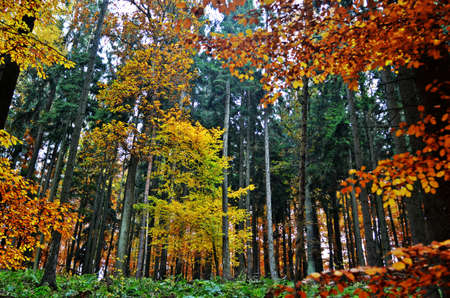 underwood: colorful forest with underwood