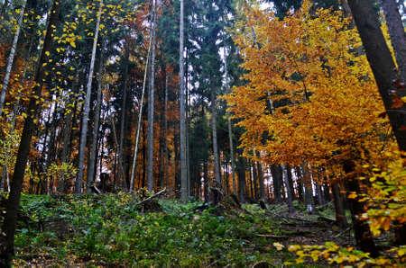 undergrowth: undergrowth in a forest
