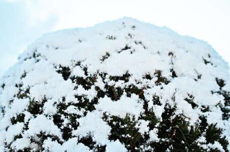 snow falls: First Snow Falls