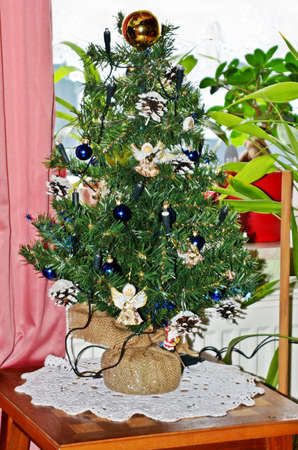 firtree: fir-tree for christmas Stock Photo