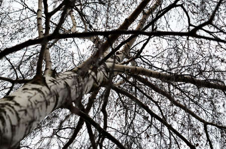 treetrunk: tree-trunk and bough Stock Photo