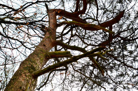 treetrunk: tree-top and tree-trunk Stock Photo