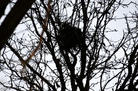 nido de pajaros: nido de p�jaros en un �rbol Foto de archivo