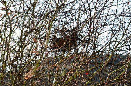 habitat: habitat of birds Stock Photo