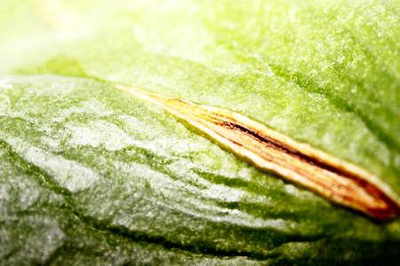 sheet: green sheet close-up