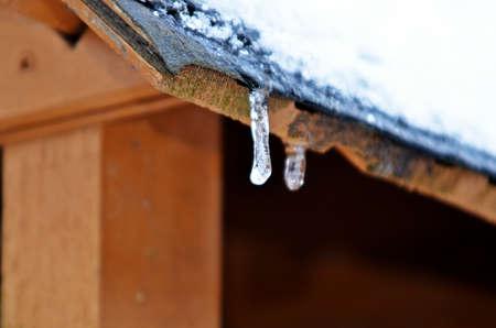 birdnest: frozen snow on roof of bird-nest