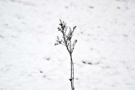 coldness: frozen grass Stock Photo