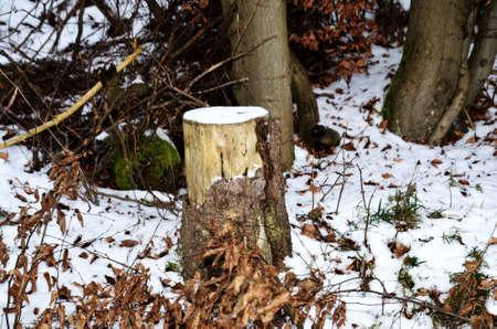 treetrunk: tree-trunk
