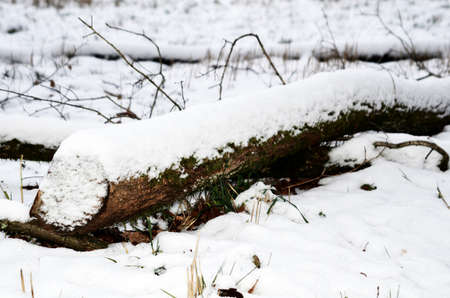treetrunk: tree-trunk under snow Stock Photo