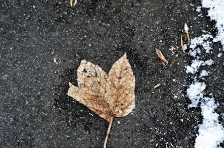 on leave: falling leave in winter